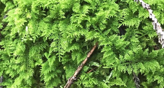 苔を育てる