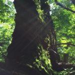 森の中で光を浴びる苔