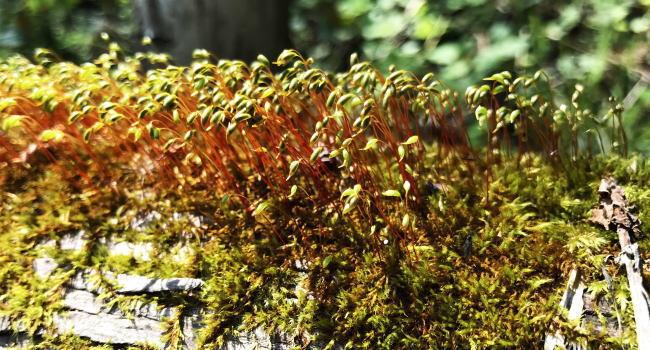 自然の中の苔