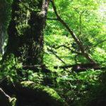 苔生した森