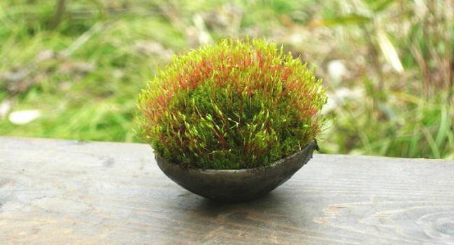 室内の窓際で育つ苔