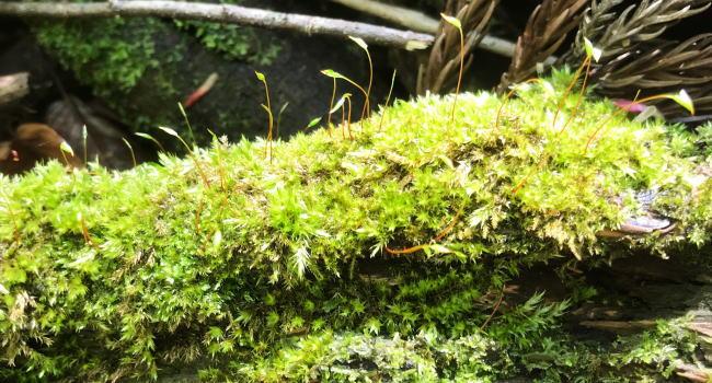 山の中の苔