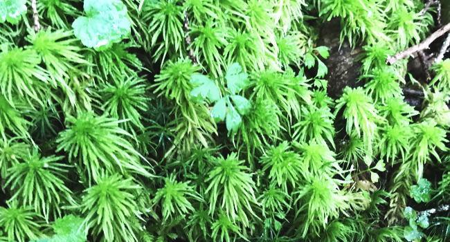 植物 種類 コケ