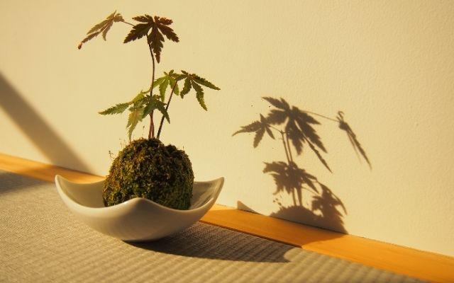 苔玉と植物