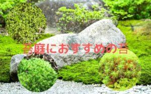 苔庭におすすめの苔