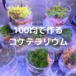 100均で作るコケテラリウム