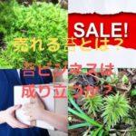 売れる苔と売れない苔